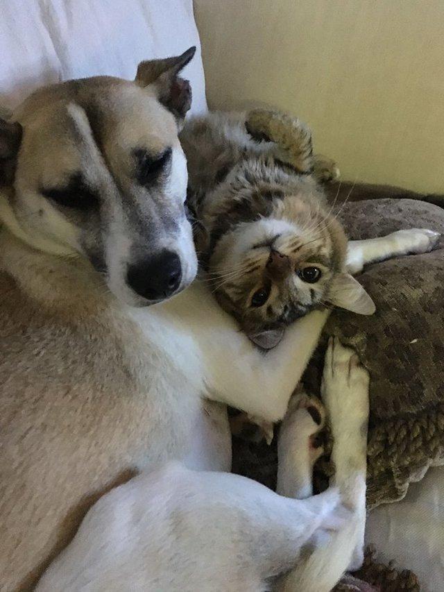 幸せいっぱいの犬と猫