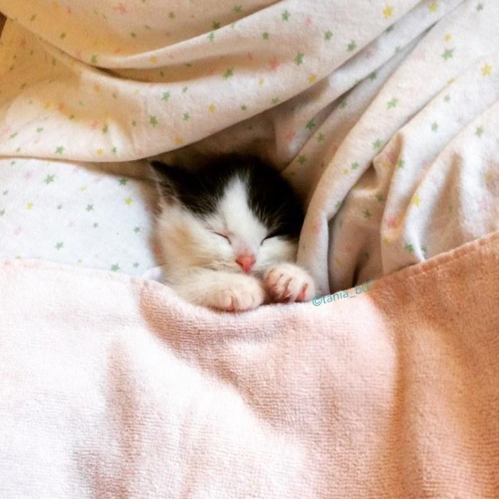 幸せそうに眠る子猫