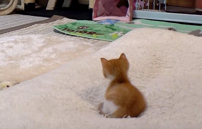 気づく子猫