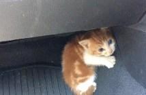 警察に助けられた子猫