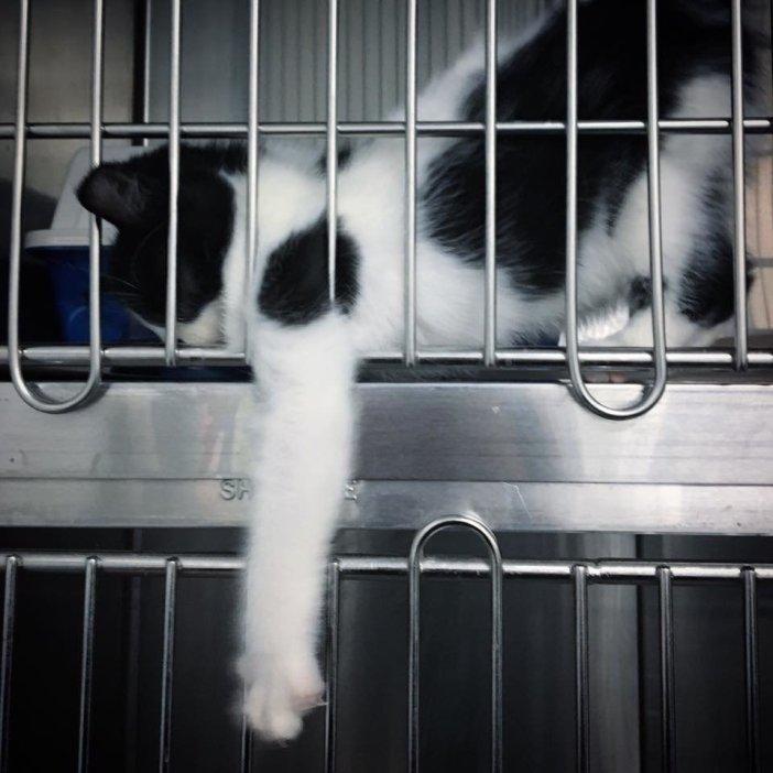 ケージから手を伸ばす子猫