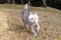 突進してくる猫