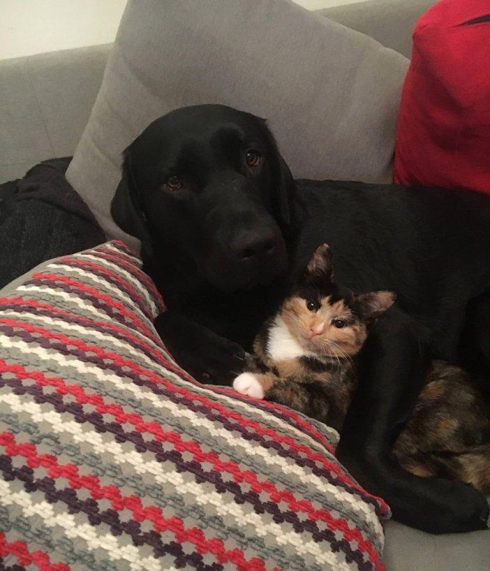 犬と一緒の子猫