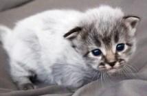 身体が白い子猫