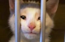 保護施設の子猫