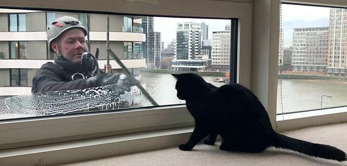 窓拭きおじさんと猫