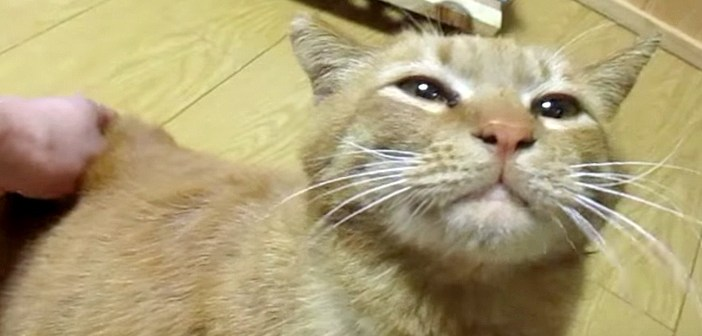 いい表情の猫