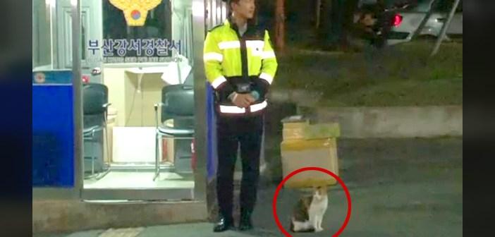 猫の警察官