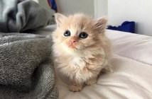 小さな子猫