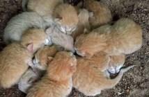8匹の子猫