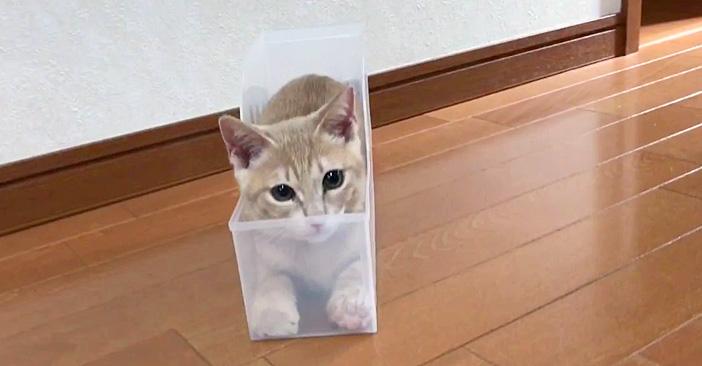 ケースの中の子猫
