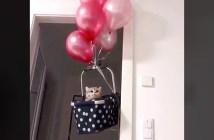風船で浮く猫