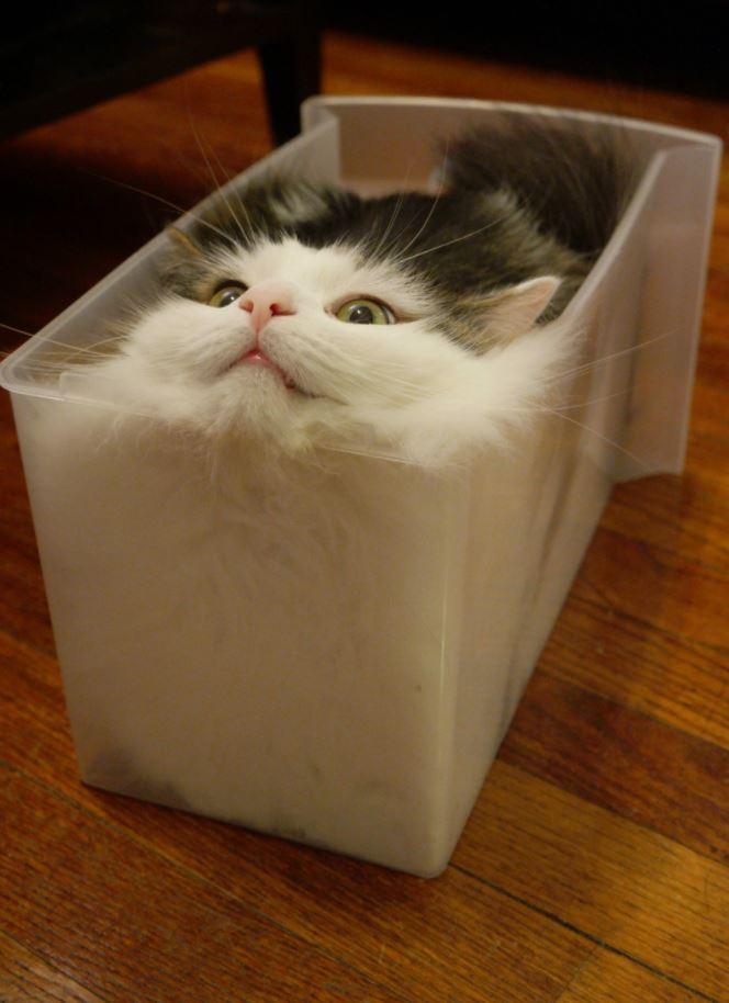 入ってる猫