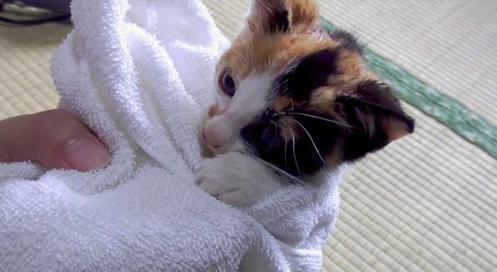 お風呂子猫