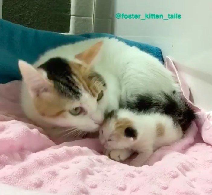 寄り添う子猫と母猫