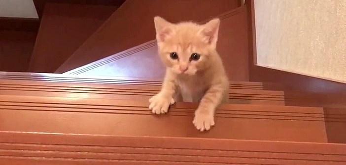 階段を登る子猫