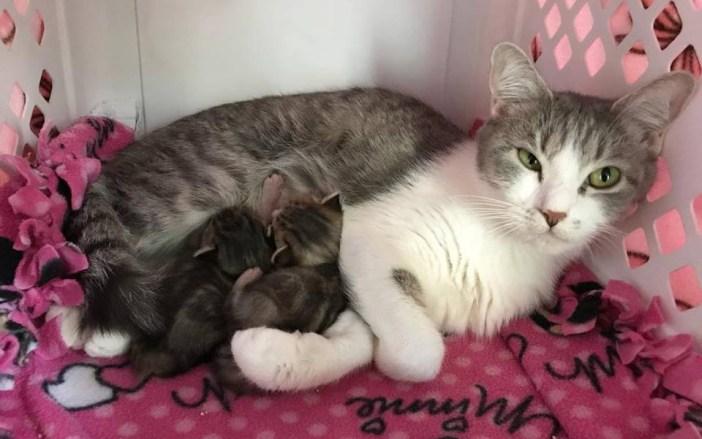 子猫を守る母猫