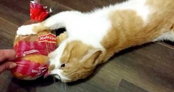 パン好きの猫