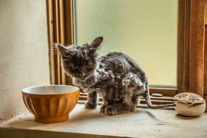 ボロボロの子猫