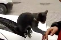 ナデナデしてほしい猫