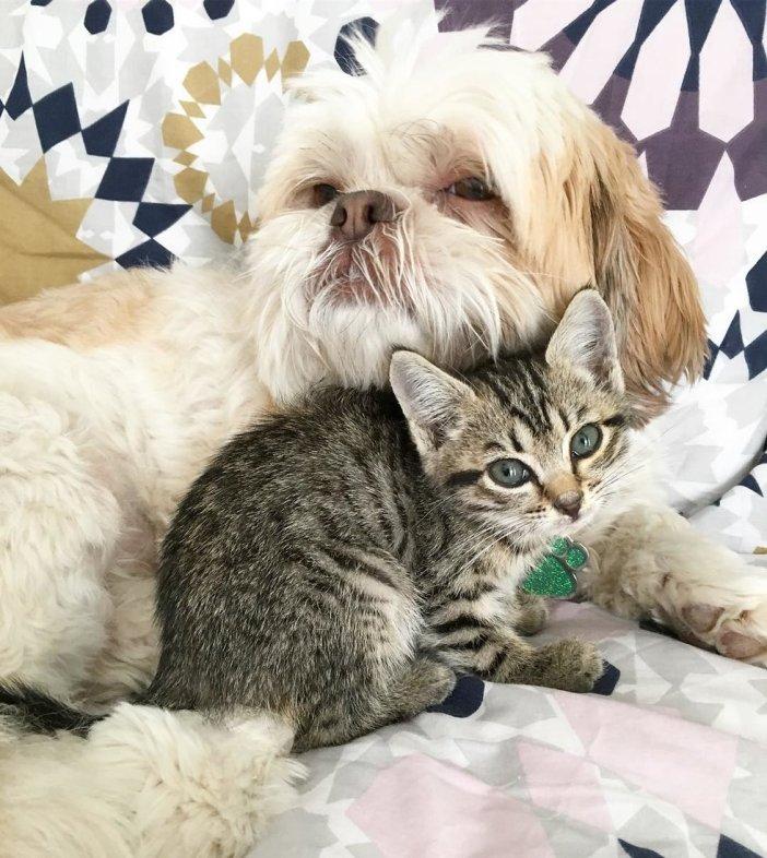 寄り添う子猫と犬