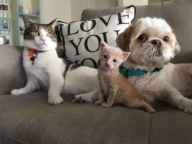 幸せな犬と子猫と猫