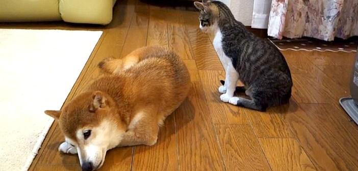 毛づくろいのチャレンジをする子猫