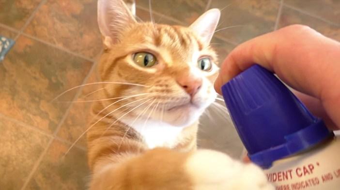クリーム好きの猫
