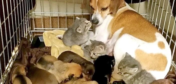 犬のお母さん