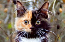 不思議な顔の猫