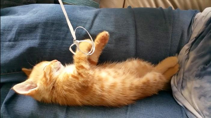 風船を持つ子猫