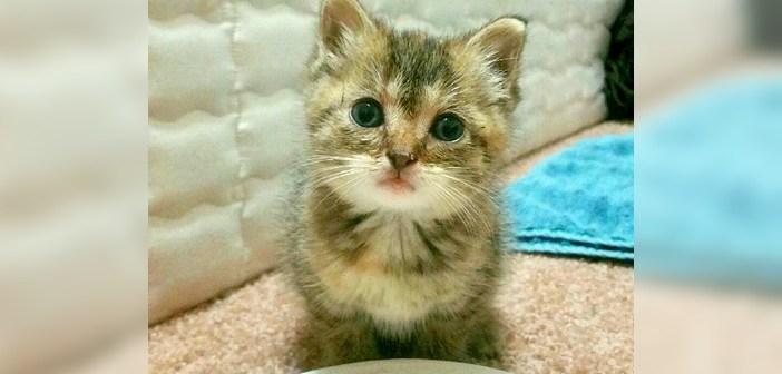 助けを求める子猫