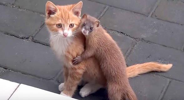 イタチと子猫