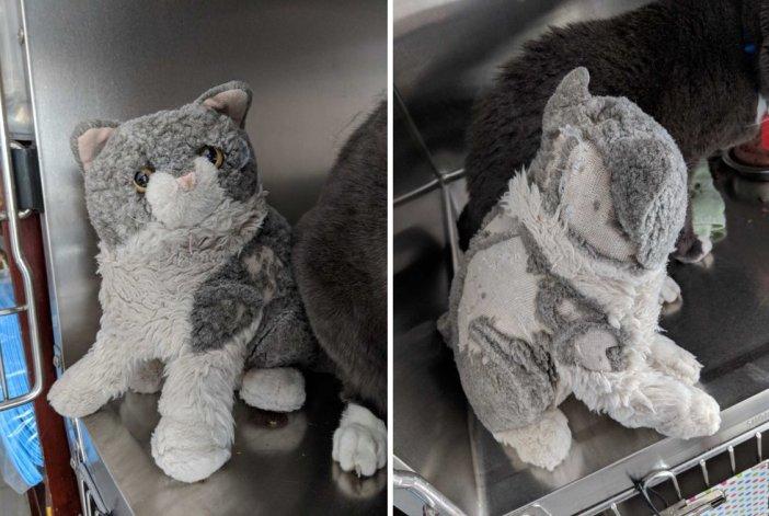 ぬいぐるみを離さない猫
