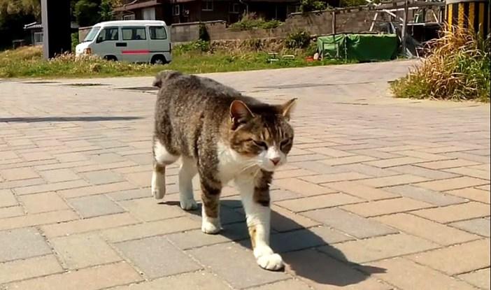 遠くの方からやって来た猫さん