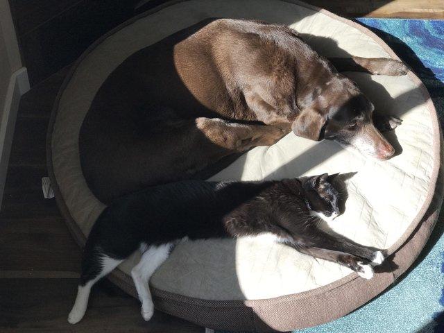 一緒に眠る猫と犬