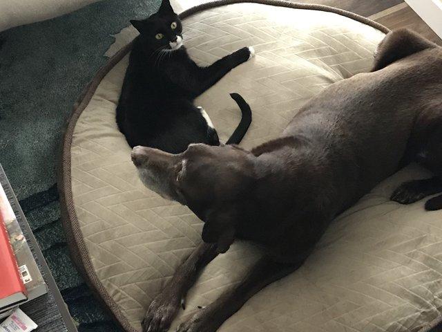 仲良しな猫と犬