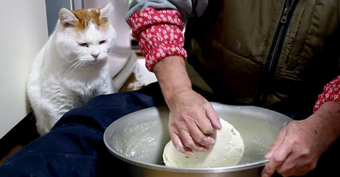 小豆ばっとう作りを見つめる猫