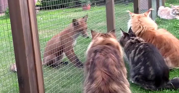 キツネと猫