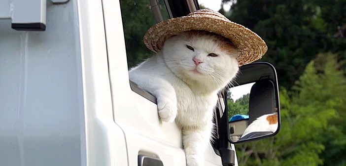 軽トラが似合う猫
