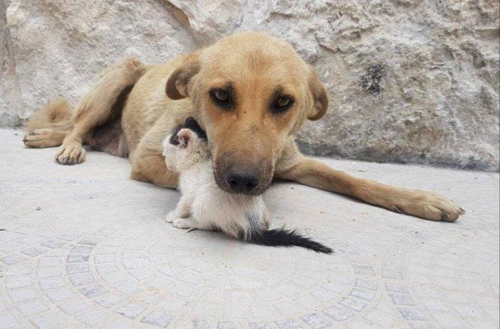 幸せそうな犬と子猫
