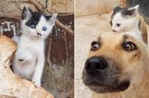 仲良しな子猫と犬