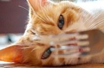 マジックを見る猫