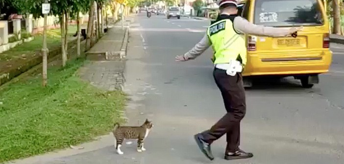 お巡りさんと猫