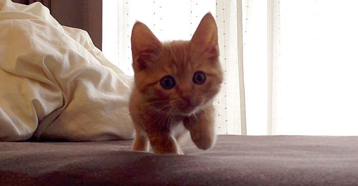 ゆっくりと近づいて来る子猫