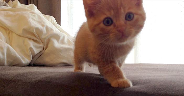 そーっと近づいて来る子猫