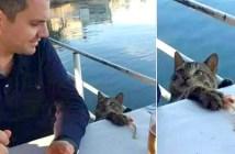 魚を盗む猫
