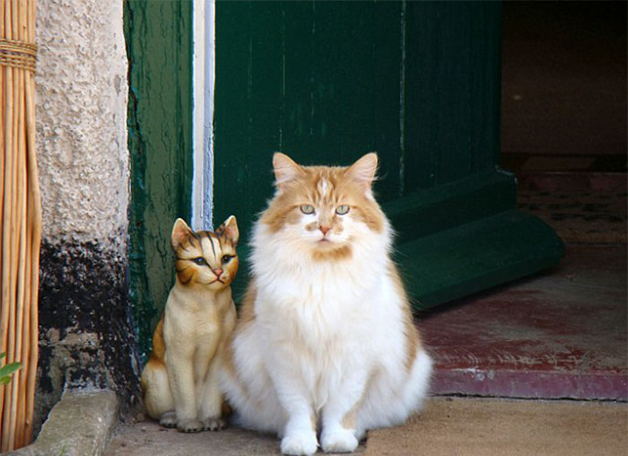 置物と並ぶ猫