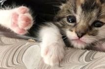 発見された子猫