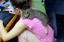 背中に乗る子猫